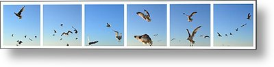 Seagull Collage Metal Print by Michelle Calkins