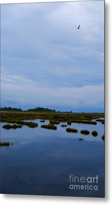Metal Print featuring the photograph Seagull In Flight by Linda Mesibov