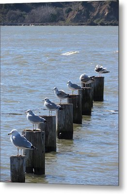 Metal Print featuring the photograph Seagulls Rest by Bonnie Muir