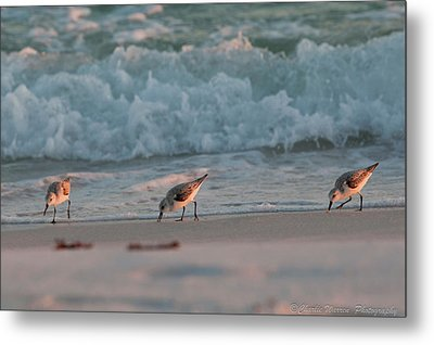 Metal Print featuring the photograph Seaside Trio by Charles Warren