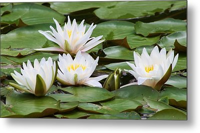 Serenity  Metal Print by Bruce Bley
