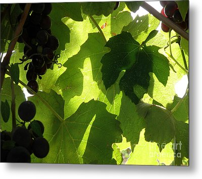 Metal Print featuring the photograph Shadow Dancing Grapes by Lainie Wrightson