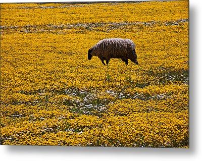 Sheep In Meadow Of Golden Flowers Metal Print by Garry Gay