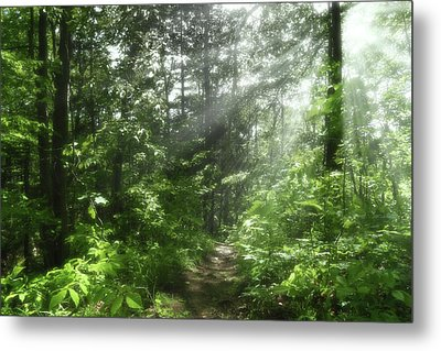 Metal Print featuring the photograph Shining Through by Anthony Rego