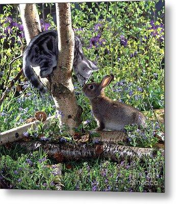 Silver Tabby And Wild Rabbit Metal Print by Jane Burton