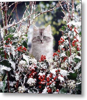 Silver Tabby Kitten Metal Print by Jane Burton