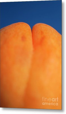 Single Ripe Apricot Metal Print by Sami Sarkis