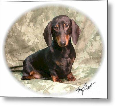 Smooth Dachshund Doxie Pup Metal Print by Maxine Bochnia