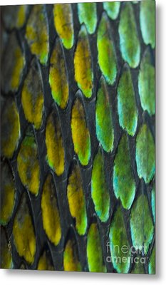 Metal Print featuring the photograph Snake Skin by John Burns