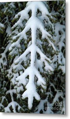 Snowy Fir Tree Metal Print by Sami Sarkis
