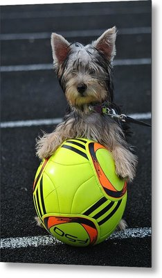Soccer Dog Metal Print by Dawn Moreland