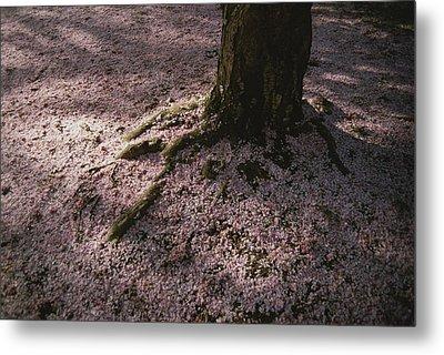 Soft Light On A Pink Carpet Of Fallen Metal Print by Stephen St. John