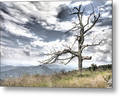 Solemn Tree Metal Print by Michael Clubb