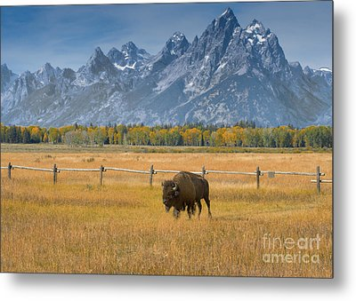 Solitary Moments Metal Print by Sandra Bronstein