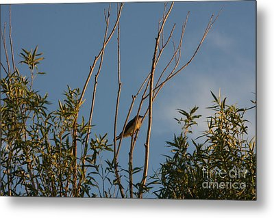 Metal Print featuring the photograph Songbird by Marta Alfred