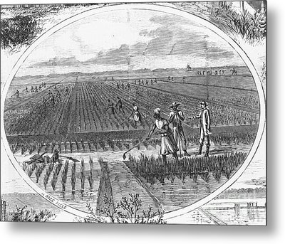 Southern Rice Field Metal Print by Omikron