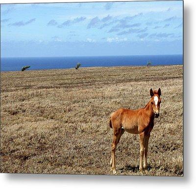Southernmost Pony Metal Print by James Mancini Heath