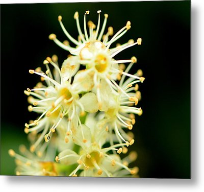 Metal Print featuring the photograph Spider Flower by Tanya Tanski