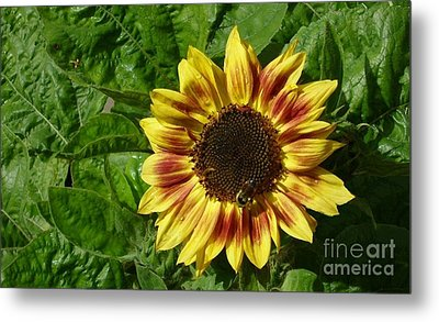 Metal Print featuring the photograph Spot The Bee by Jim Sauchyn