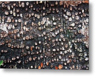 Spotted Bark Metal Print by Jennifer Bright
