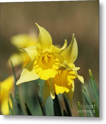 Metal Print featuring the photograph Springing Spring by Julie Clements