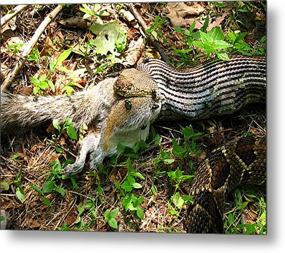 Metal Print featuring the photograph Squirrel's End by Doug McPherson