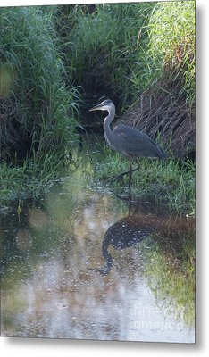 Stalking Metal Print by Rod Wiens