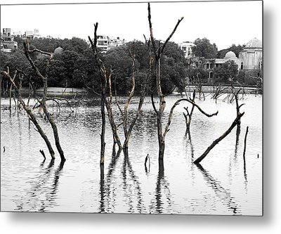 Stomps Of Trees In A Lake Metal Print by Sumit Mehndiratta
