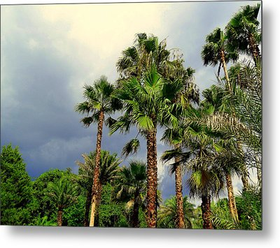 Stormy Skies And Palms Metal Print by Sheri McLeroy