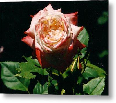 Strawberry Rose Metal Print