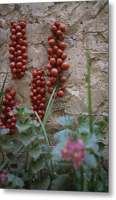 Strings Of Tomatoes Dry On A Wall Metal Print by Tino Soriano