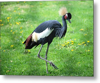 Strut Your Stuff Metal Print by Kathy Gibbons
