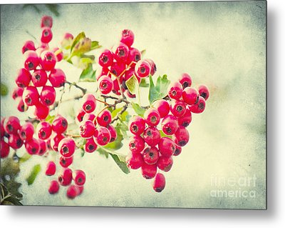Summer Berries Metal Print by Angela Doelling AD DESIGN Photo and PhotoArt