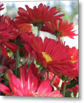 Summer Day Metal Print