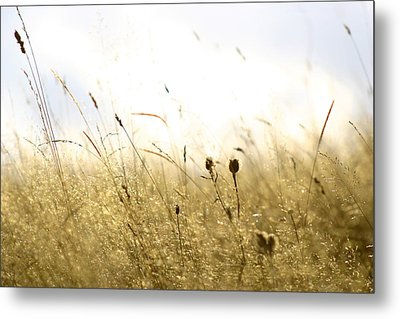 Summer Field Metal Print by Emanuel Tanjala