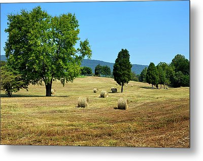 Metal Print featuring the photograph Summer Field by Paul Mashburn