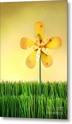 Summer Fun In The Grass Metal Print by Sandra Cunningham