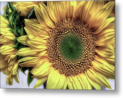 Sunflower 28 Metal Print by Natasha Bishop