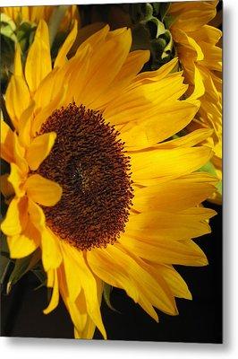 Sunflower--dappled Light Metal Print by Vikki Bouffard
