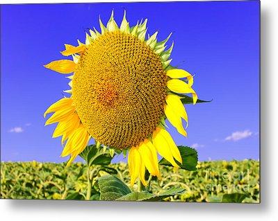 Sunflower Head Metal Print by Volodymyr Chaban