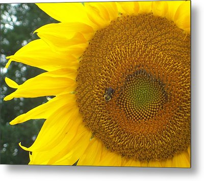 Metal Print featuring the photograph Sunflower by Lou Ann Bagnall
