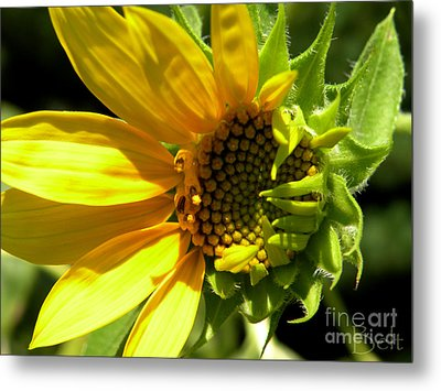 Sunflower No. 1 Metal Print by Christine Belt