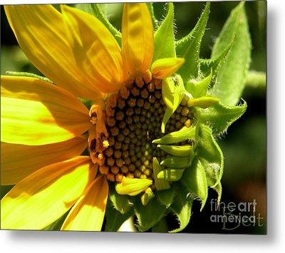 Sunflower No. 2 Metal Print by Christine Belt
