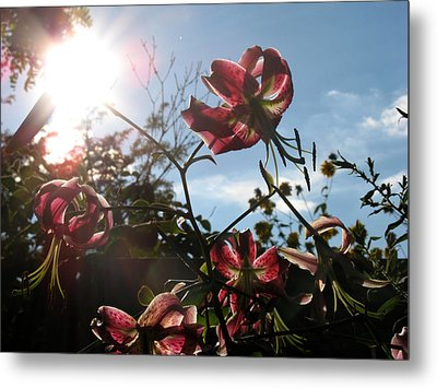 Sunlight Through Flowers Metal Print