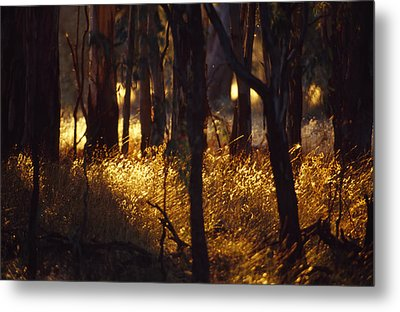 Sunset Falls Over Seeding Grasses Metal Print by Jason Edwards