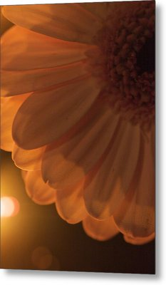 Sunset Flower Metal Print