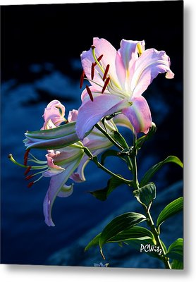 Sunset Lily Metal Print by Patrick Witz