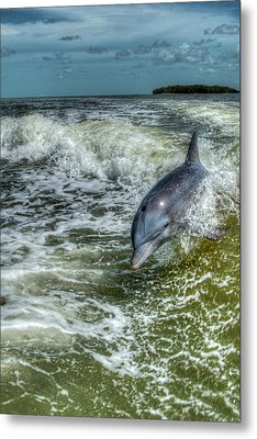Surfing Dolphin Metal Print by Nick  Shirghio