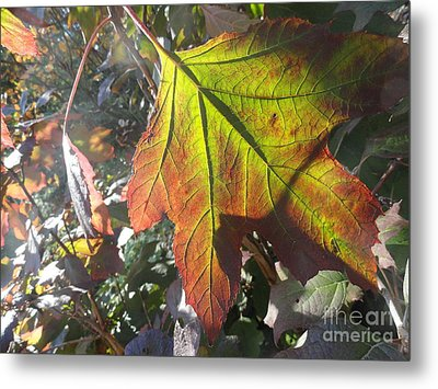Surrender Metal Print by Trish Hale