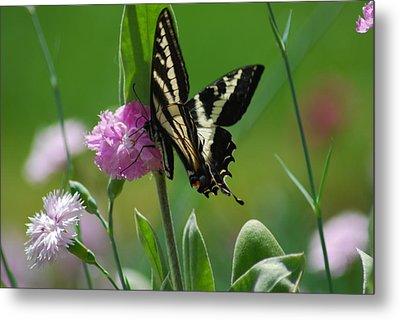 Swallowtail On Pink Metal Print